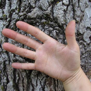 Erika's hand